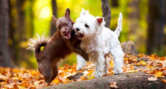 hunden slikker sig om munden