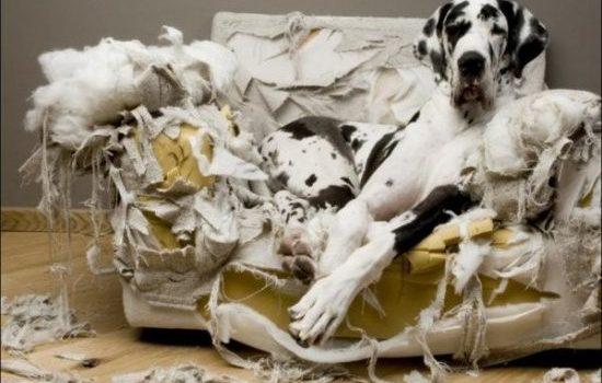 hunde slikker poter