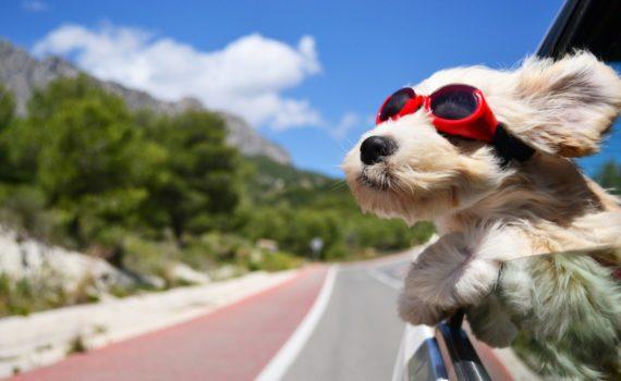 beroligende bindeteknik til hunde